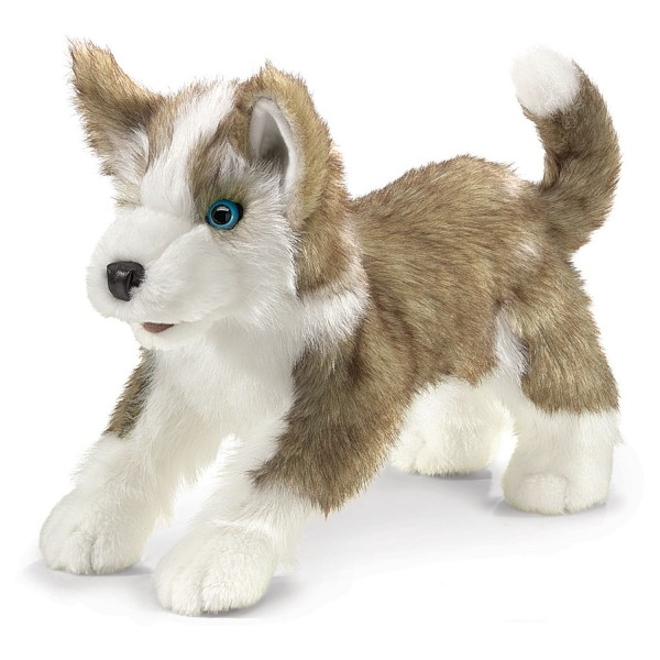 Wolfsjunges / Wolf Pup