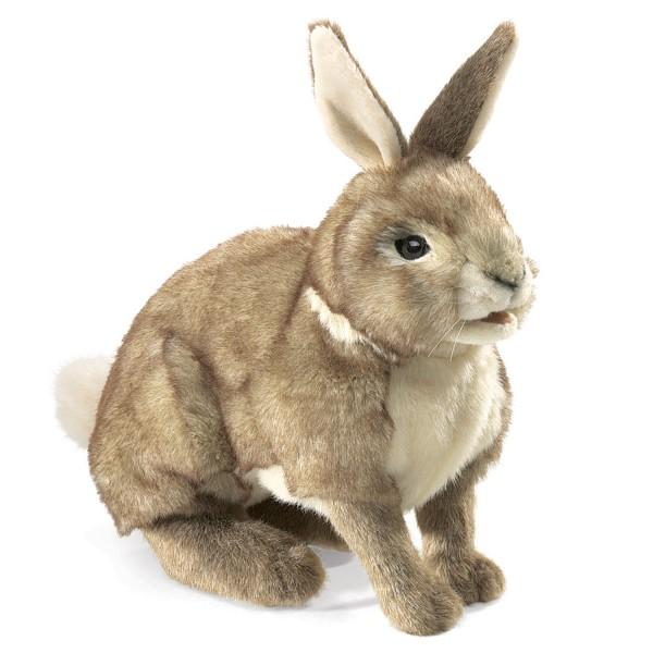Rabbit, Cottontail