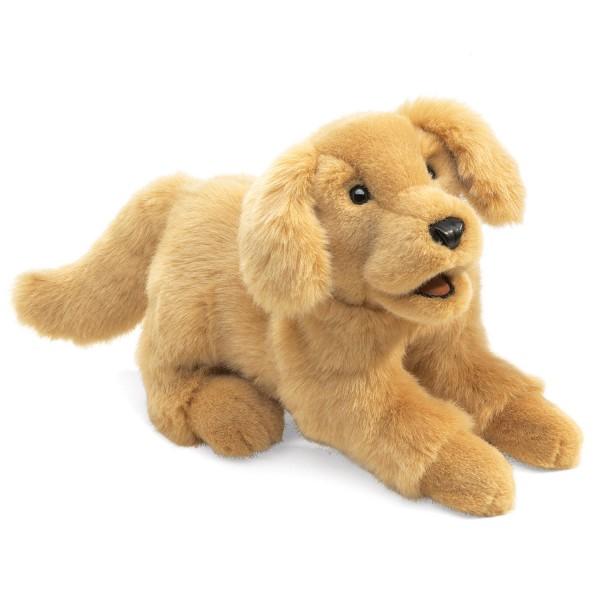 Golden Retriever Baby / Golden Retriever Puppy