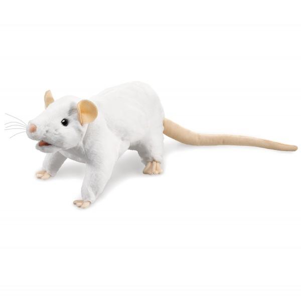 Weiße Ratte / White Rat