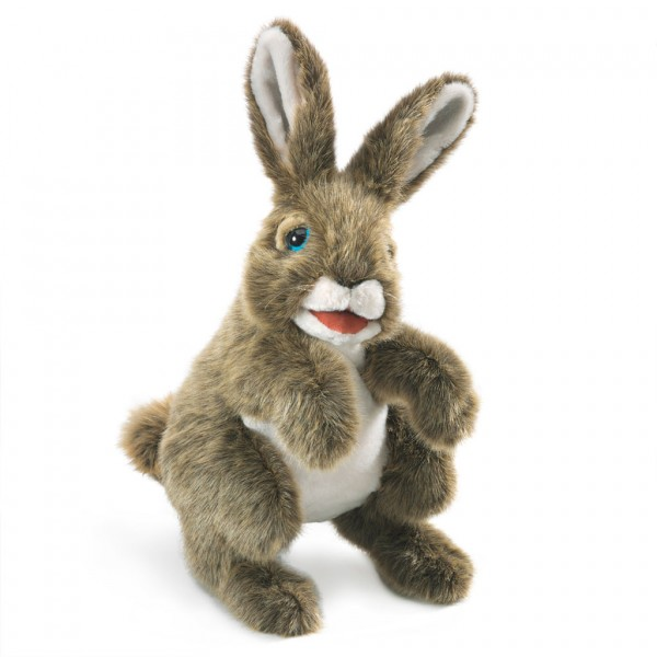 Hase / Hare