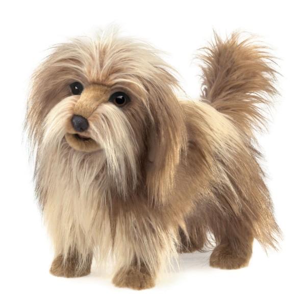 Wuschelhund / Shaggy Dog